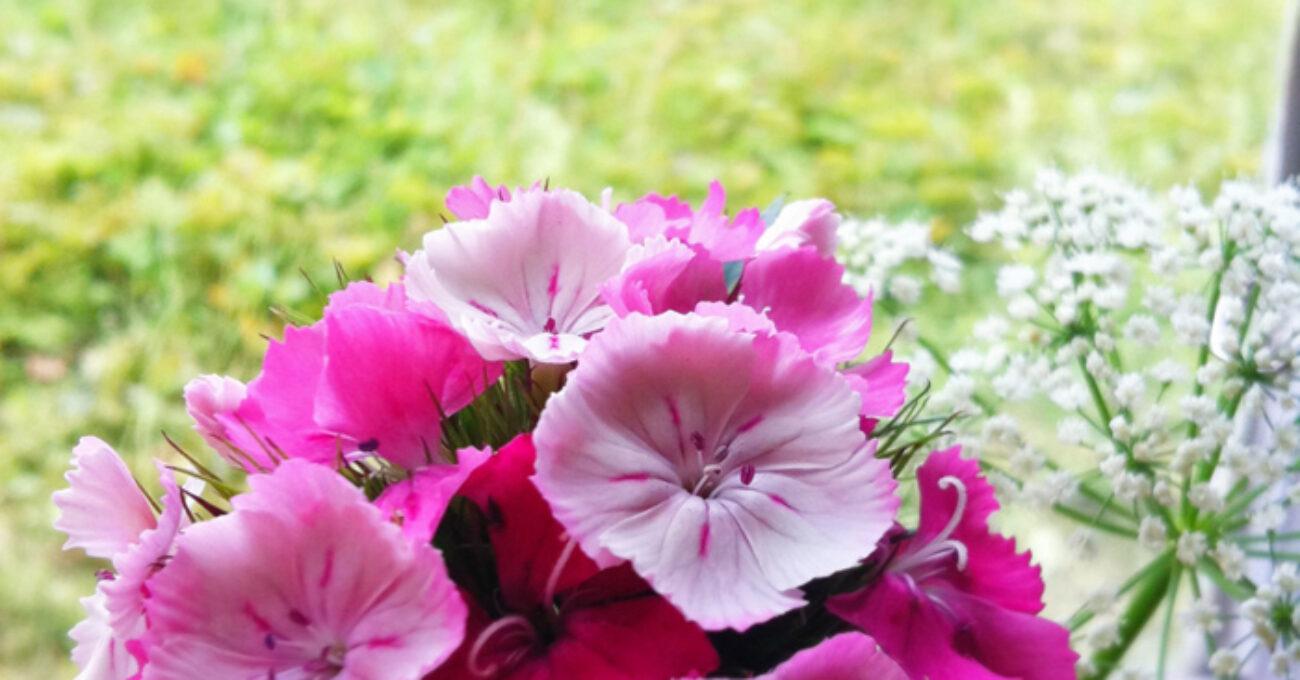 blomma sommarställe blogg 130710