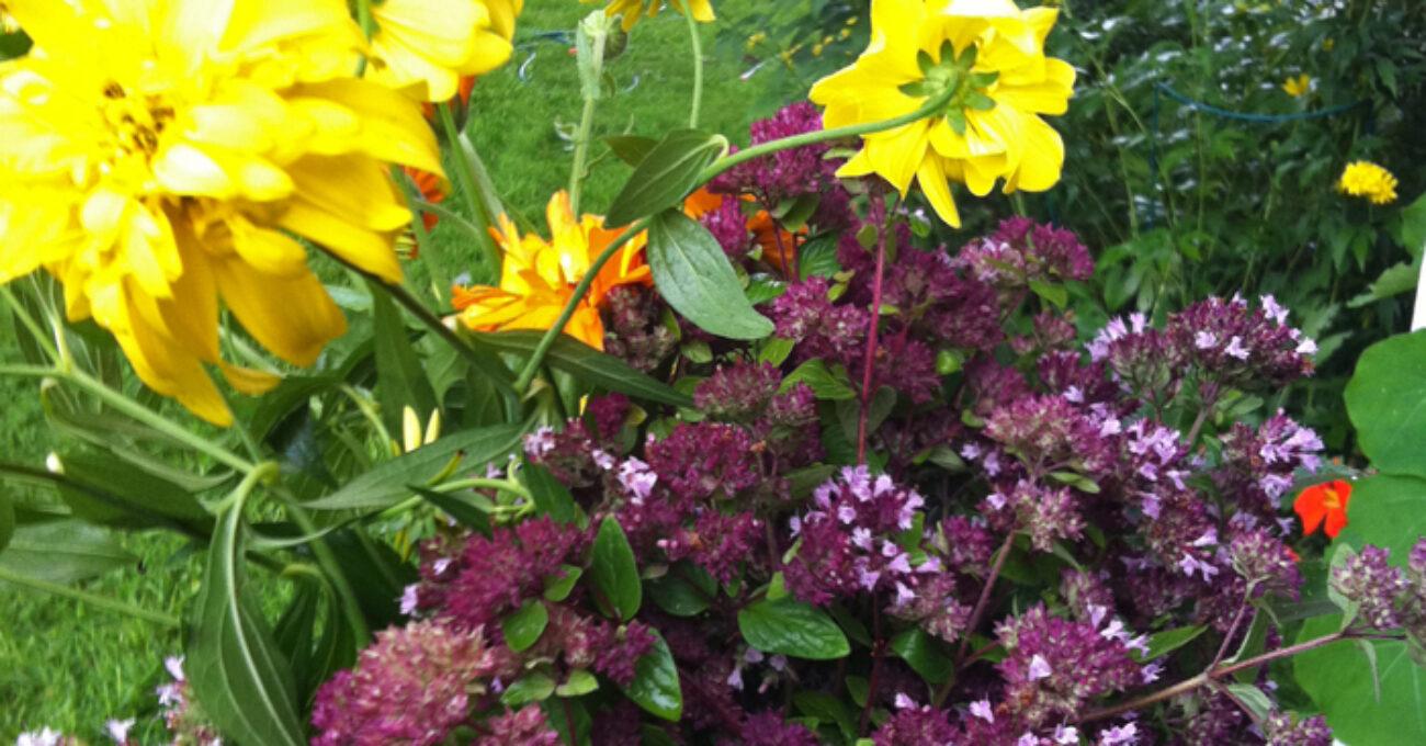 blomsterskörd blogg 130820