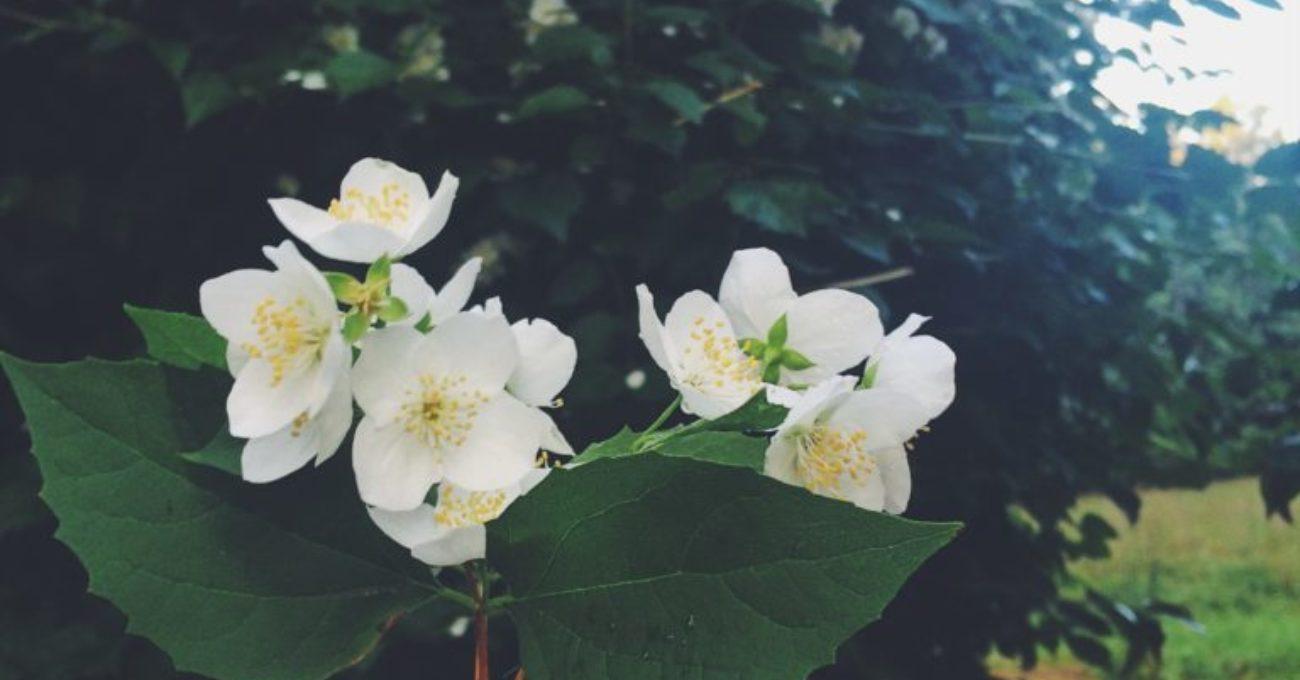 Trädgårdslängt och efterlängtad tillökning