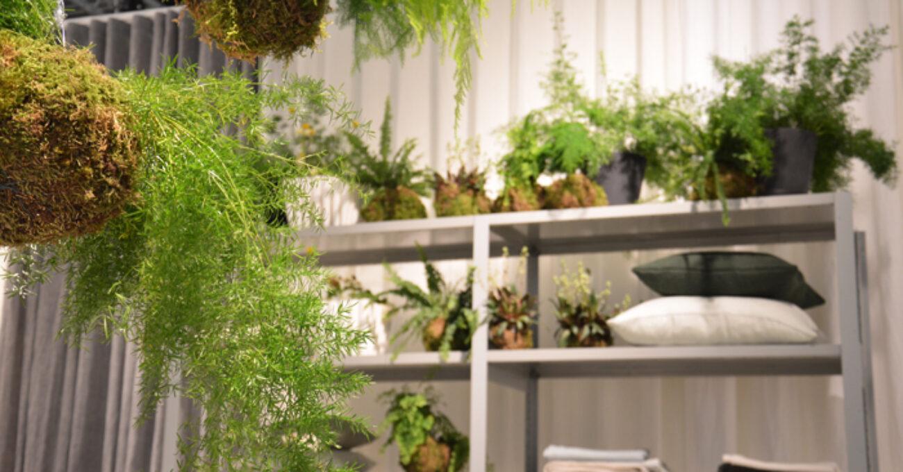 astrid gröna växter