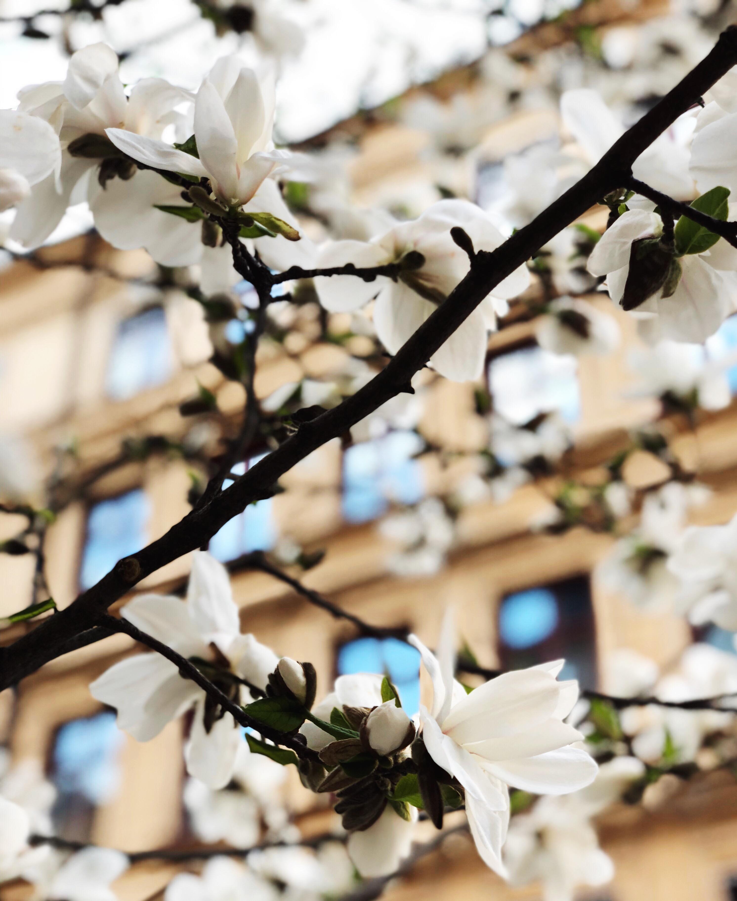 Välkommen bästa månaden på året – maj