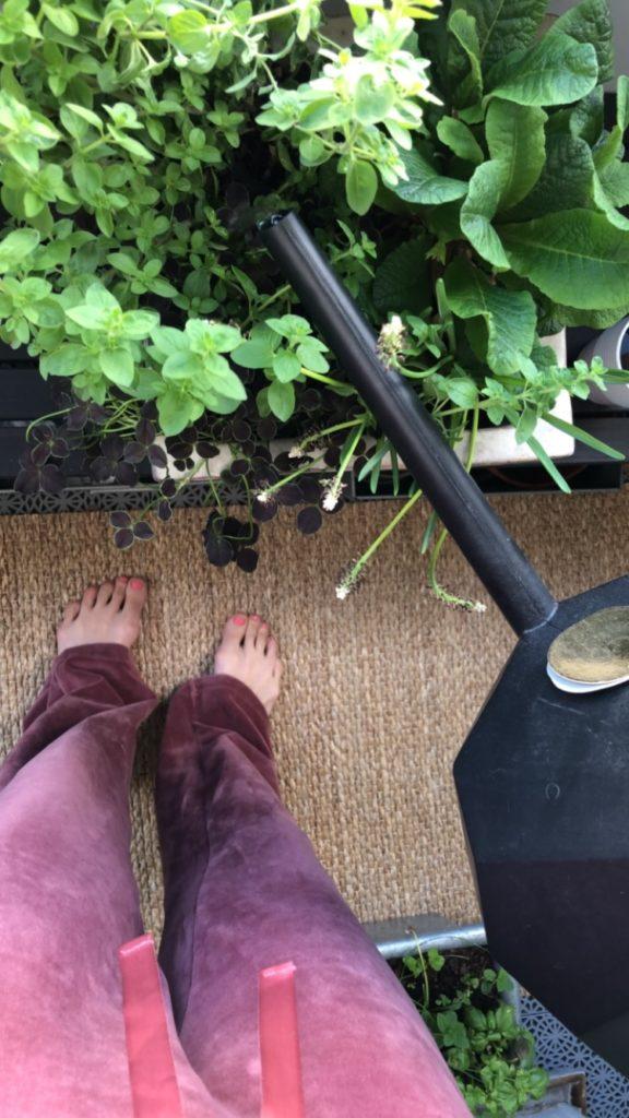Guldvatten i trädgårdsodlingen… Nytt avsnitt av Trendpodden