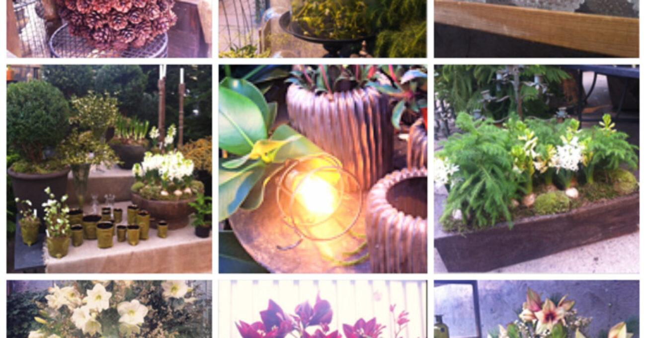 kollage ulriksdal trädgård blogg 1 131201