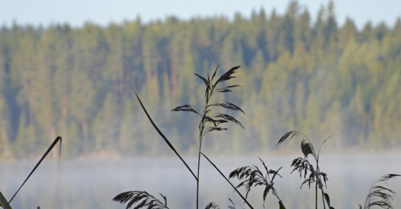 dimma sjö blogg 140914
