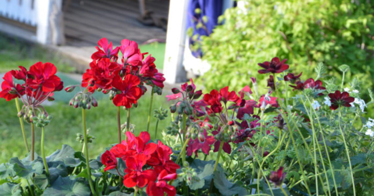 blomlådor blogg 140609