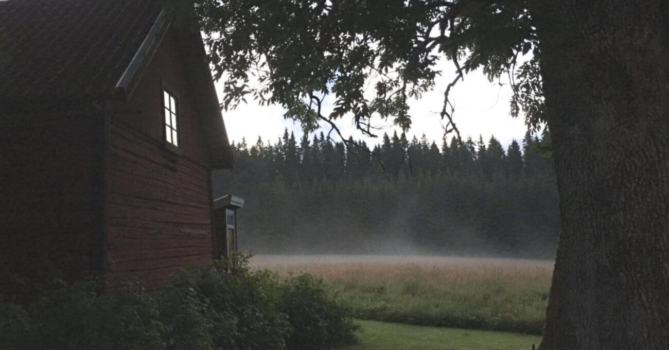 dimma bredsjöbäcken