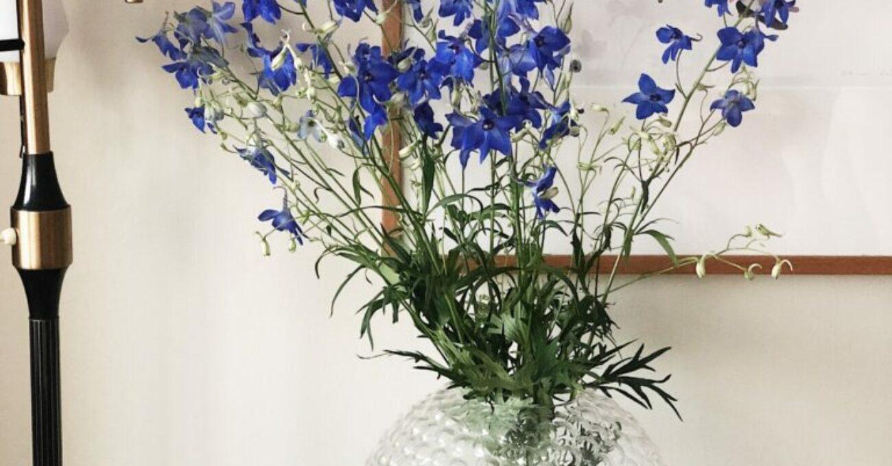 Nationaldagsfirande i blågult som avslutas med knäckig rabarberpaj