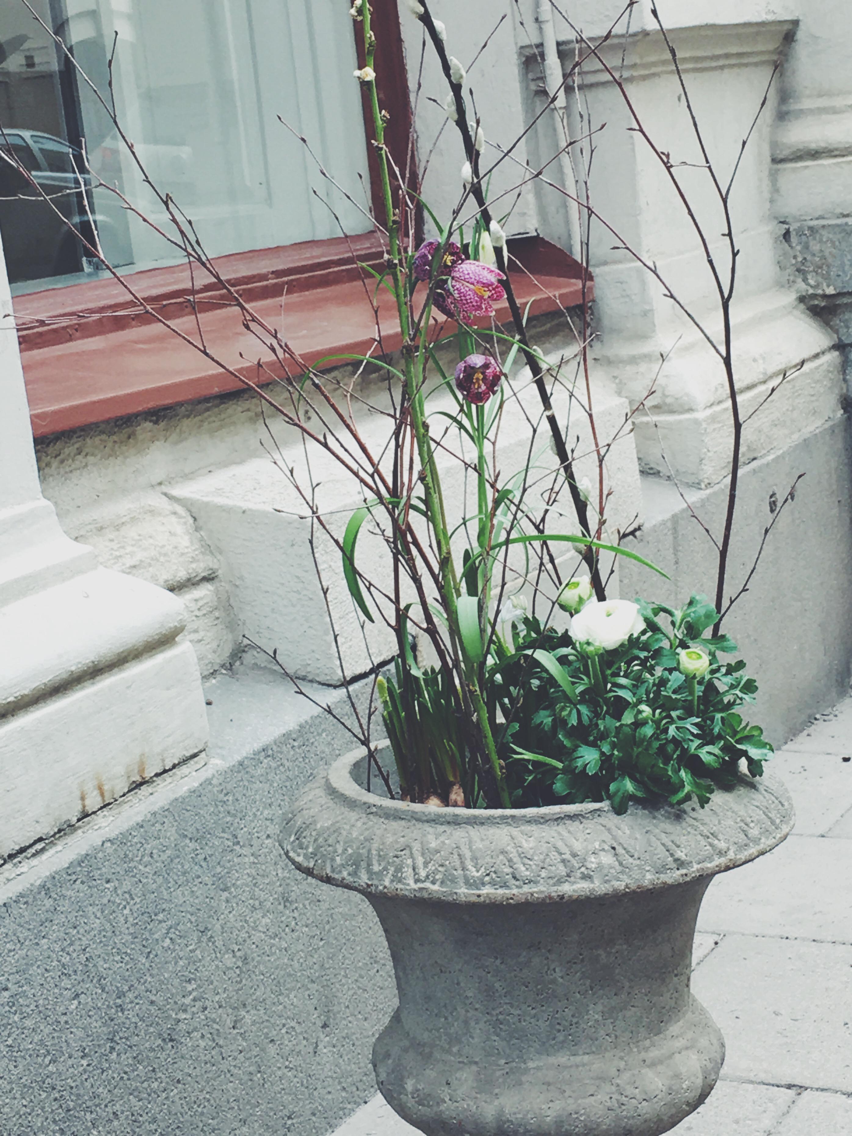 #blommor#inredning#inredningsblogg#joelhome#johannahulander
