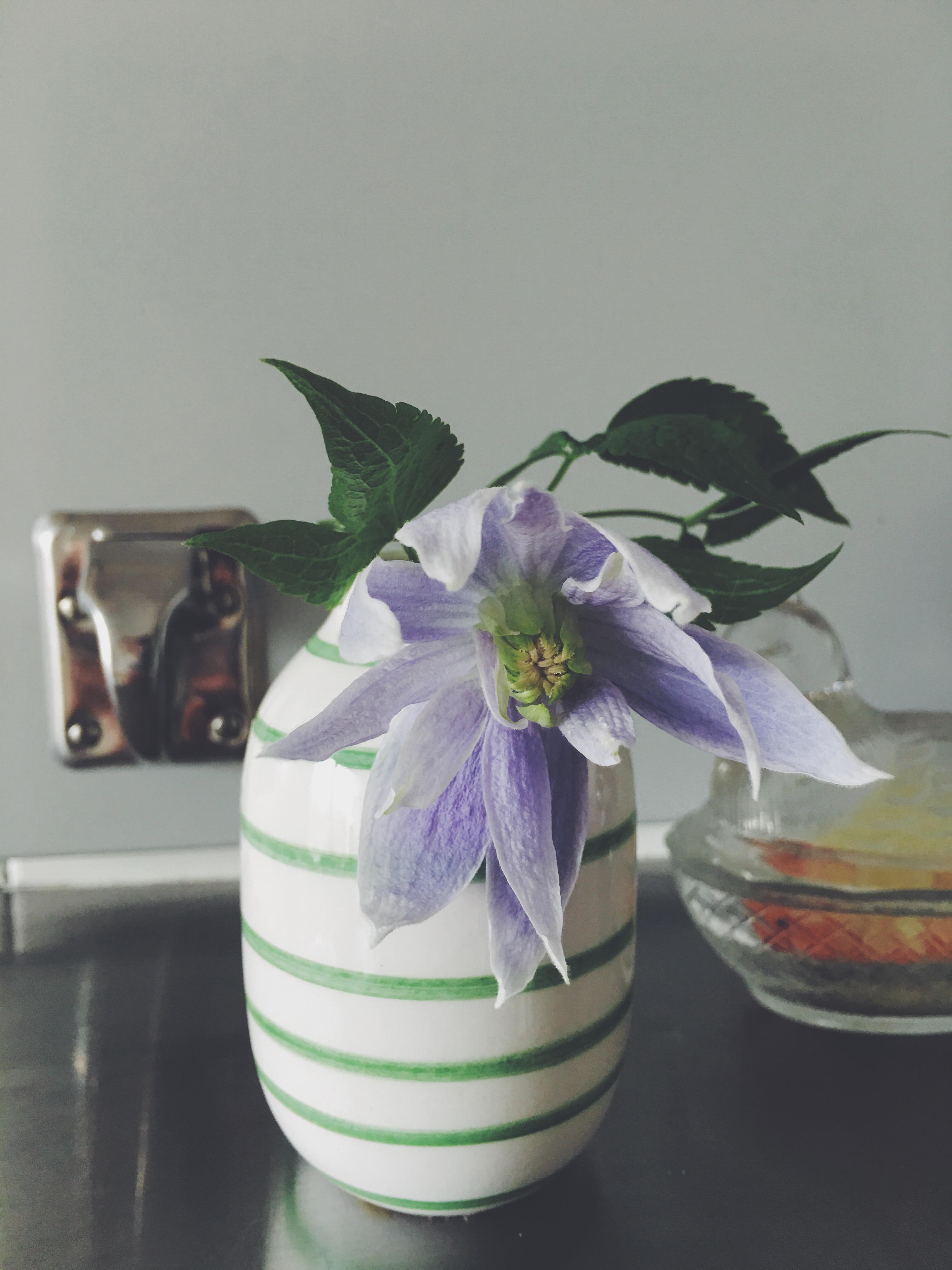 #clematis#flower#blomma#påsk#inredningsblogg#joelhome