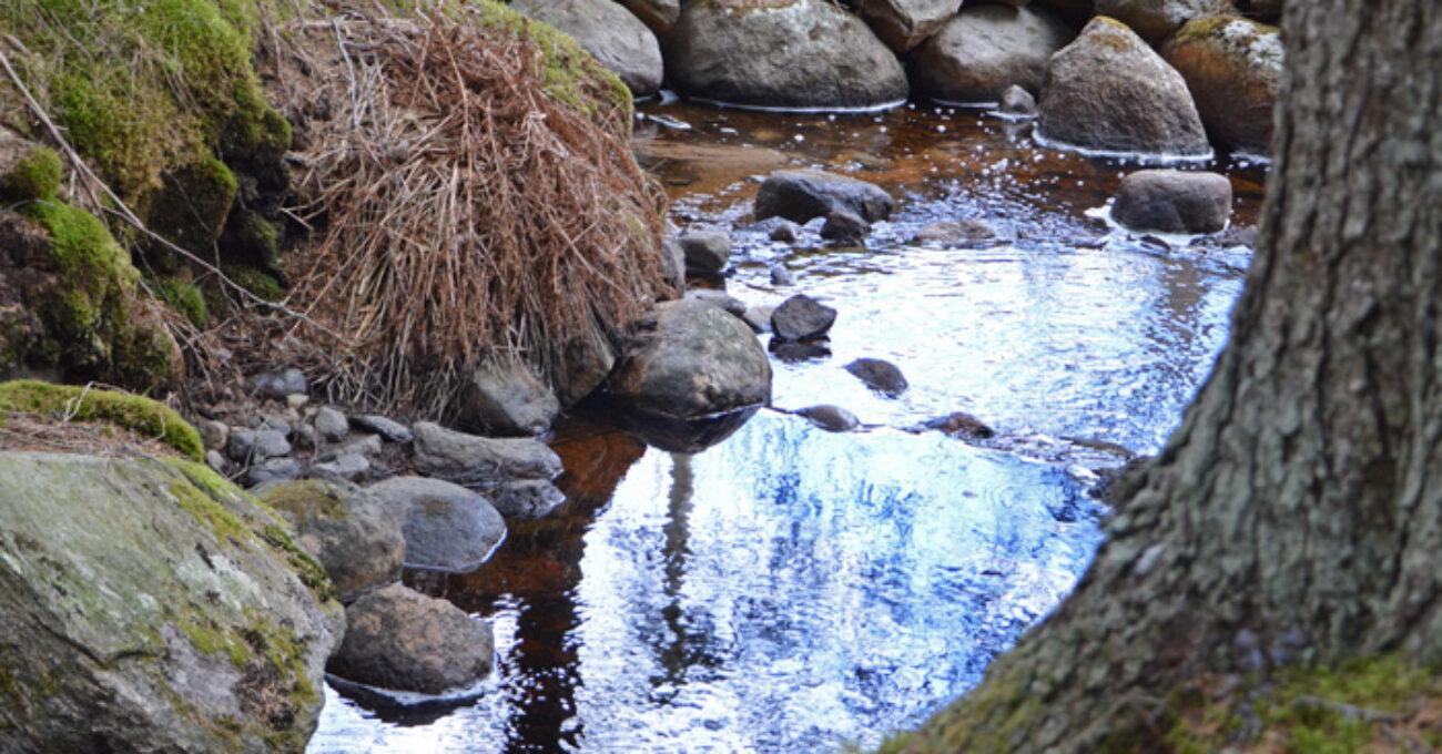 bäck skog blogg 130428