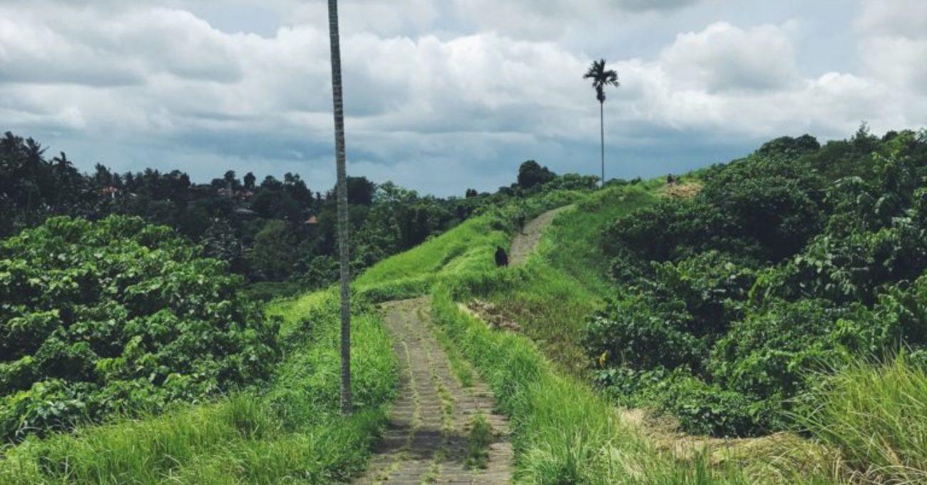 Take a walk in Bali – Campuhan ridge walk.
