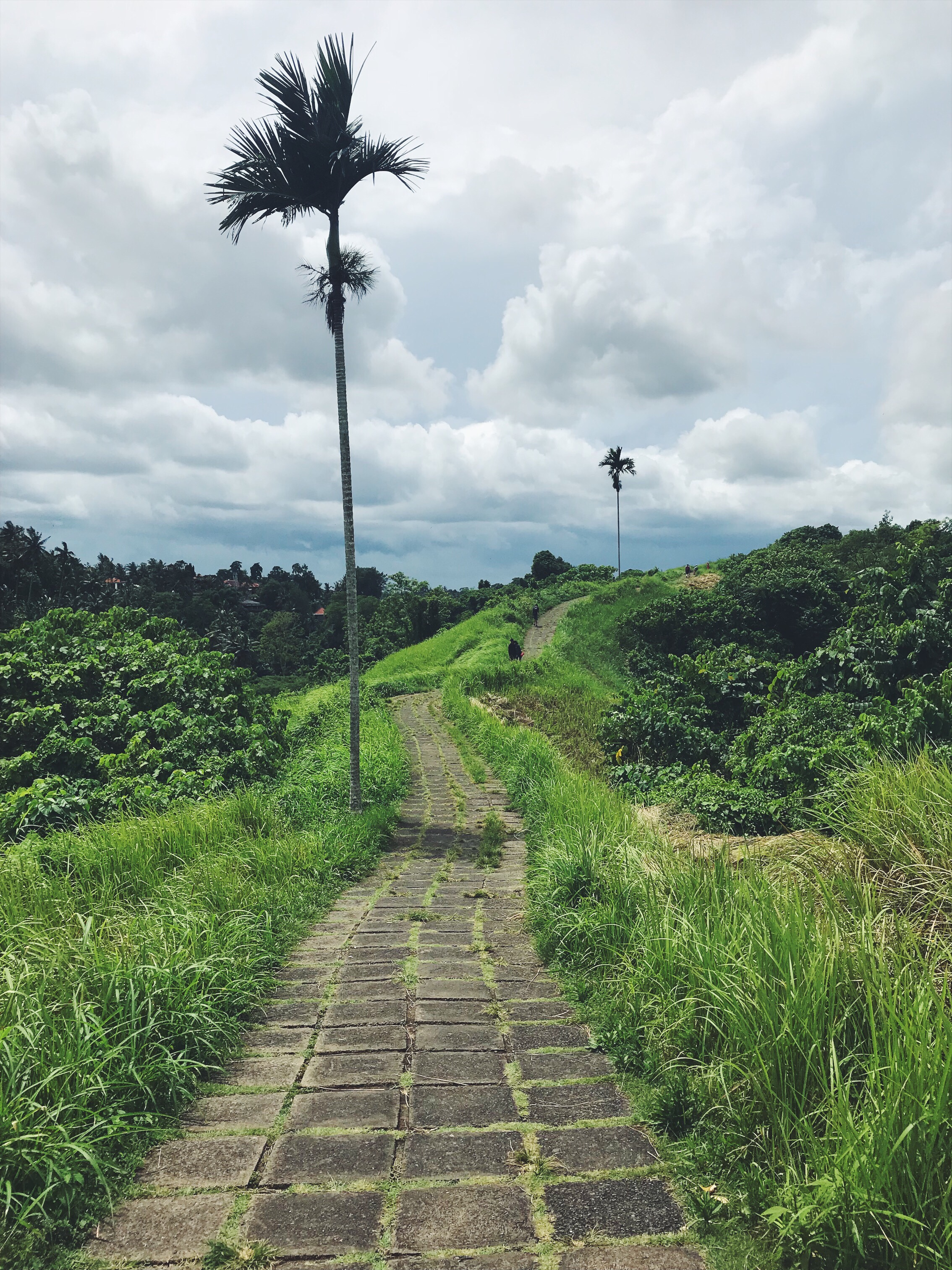 Take a walk in Bali – Campuhan ridge walk.