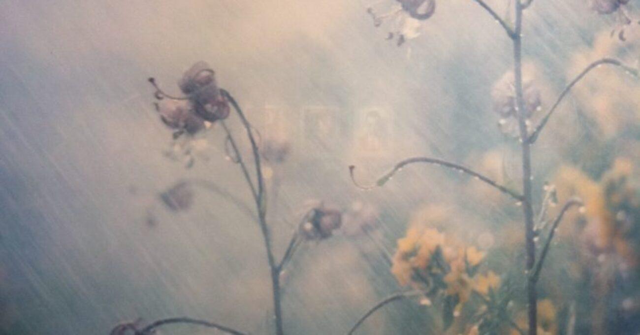 fotokonst fotografiska blommor