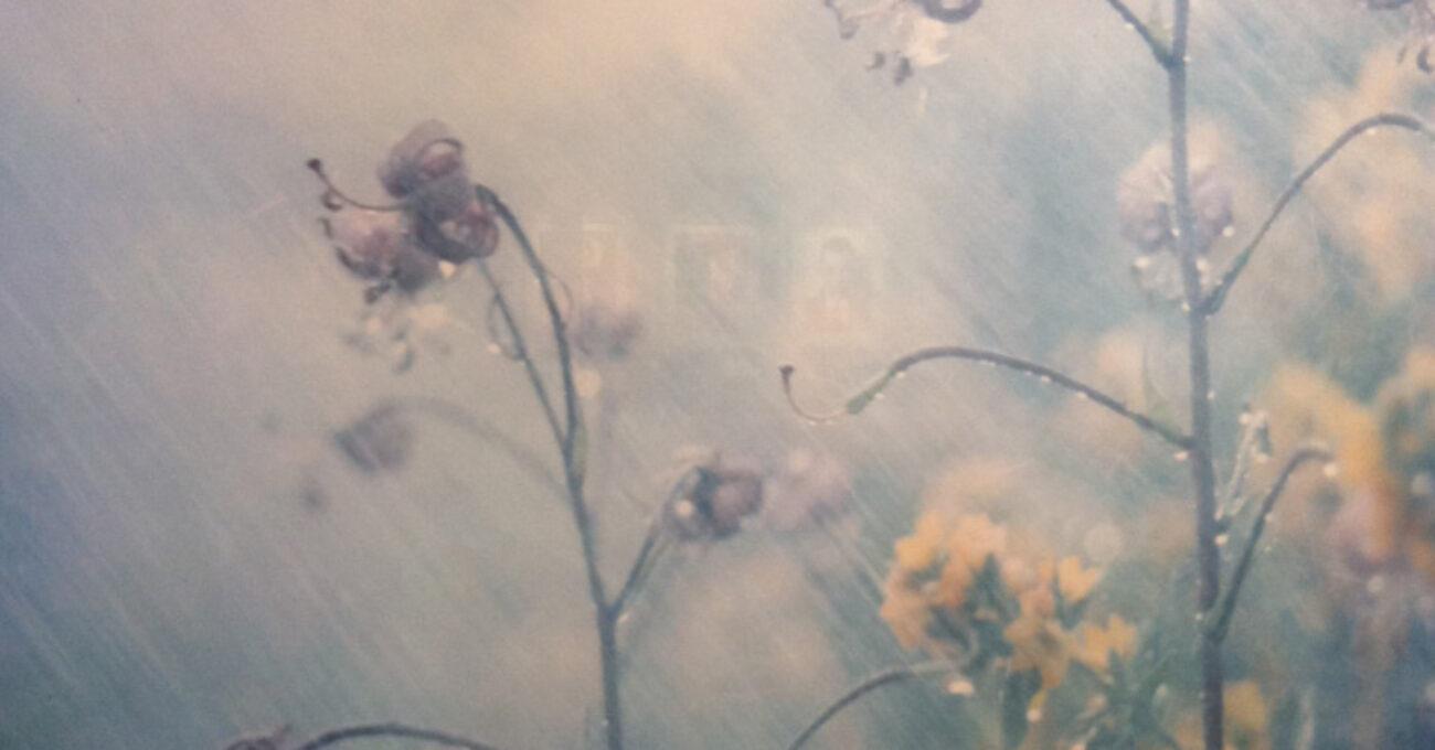 fotokonst fotografiska blommor blogg 130515