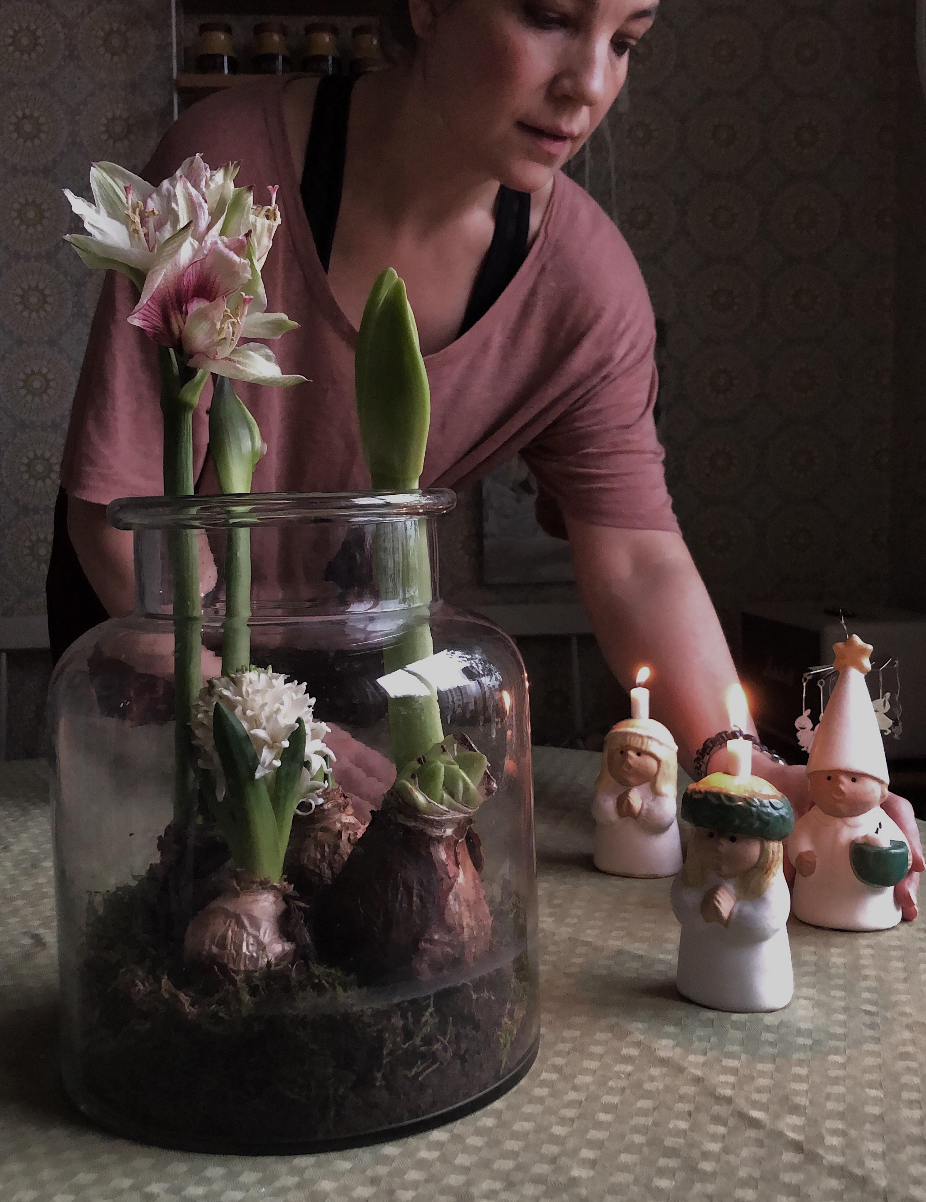 Mini-växthus för amaryllis #DIY