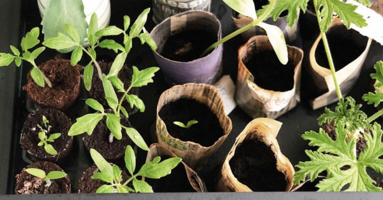 Vår och odling på liten yta