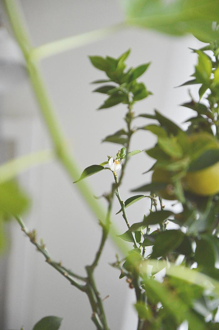 #apelsinblom#orangebloom#inredningsblogg#joelhome