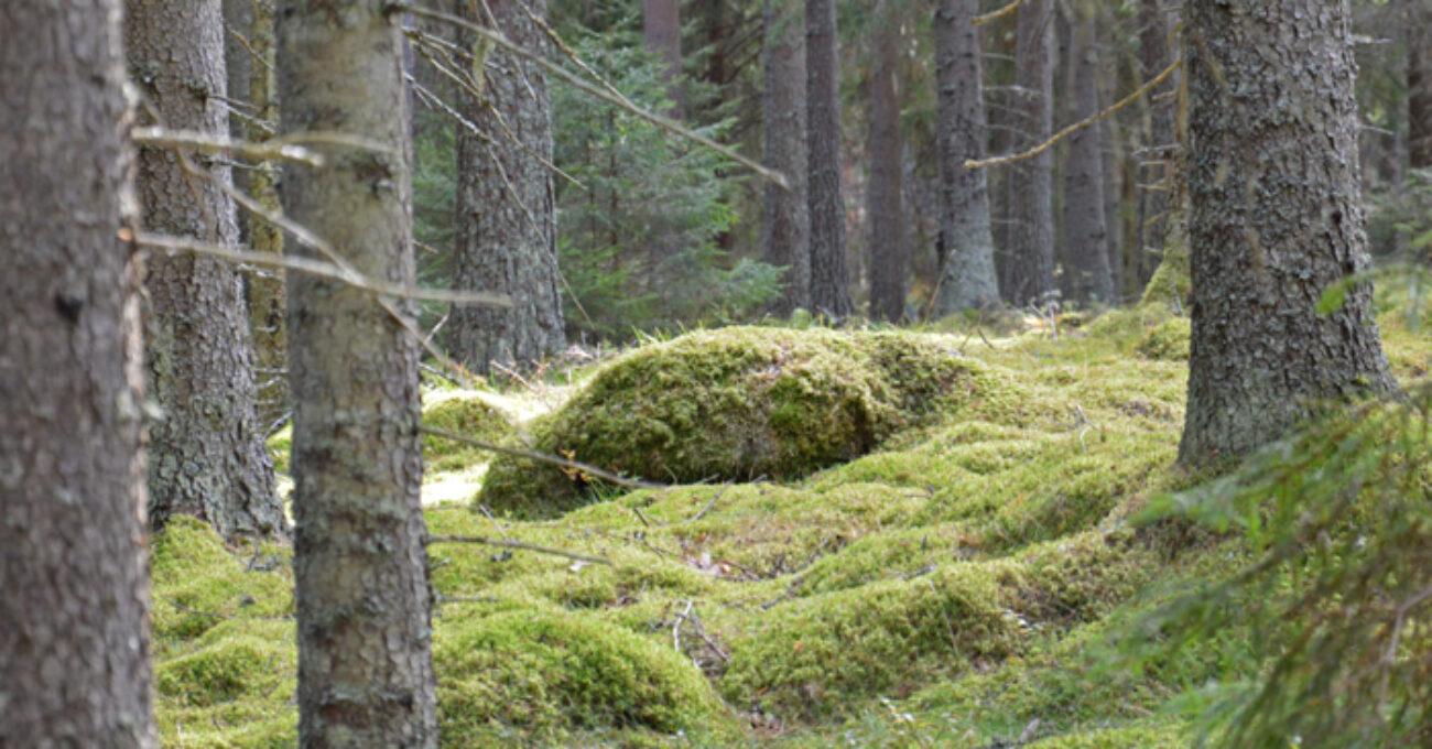 naturen blogg 130930