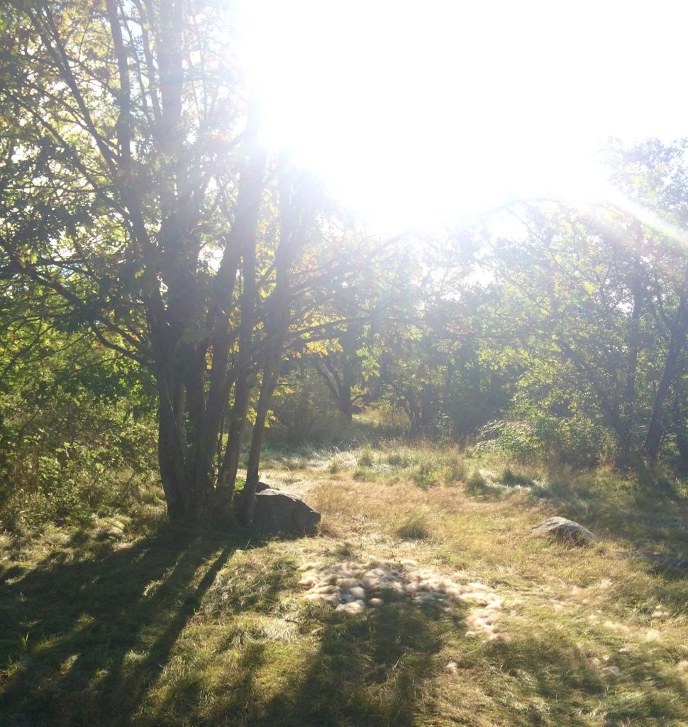 #forest#sweden#inredningsblogg#joelhome